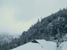 snowfall Royaltyfri Fotografi