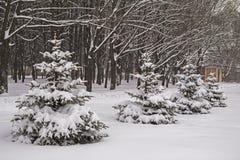 snowfall Abeti innevati di inverno La Russia Fotografie Stock Libere da Diritti