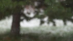 Snowfall against blurred pine tree. On background stock footage