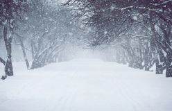 Snowfall Royalty Free Stock Photo