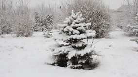Snowfall asleep spruce in the park stock video footage
