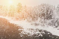Snowfall on the background of the winter forest Stock Photos
