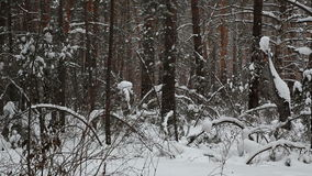Snowfall in the background of a winter forest. stock footage