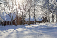Snowfall in backlit. Amongst the trees with a barn in the background Royalty Free Stock Images