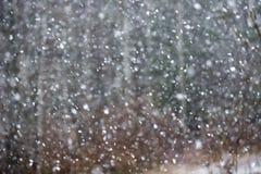 snowfall Bild av snöhäftiga snöstormen royaltyfri foto