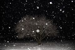 Snowfall, blizzard, snow flakes, winter tree covered snow at night. Beautiful minimalism landscape. Snowfall, blizzard, snow flakes, winter tree covered snow at stock image