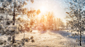 Snowfall in bueatiful winter park Stock Image