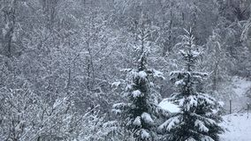Snowfall calmly and quietly falls on branches of trees. Winter stock video footage