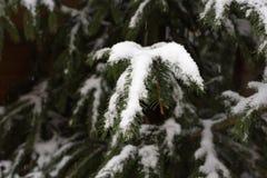 snowfall on christmas marketplace in advent december 2 stock photos
