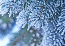 Snowfall on Christmas tree Royalty Free Stock Image
