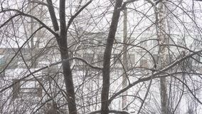 Snowfall in the city on a cloudy winter day, snowbound branches of trees. Snowfall in the city on a cloudy winter day, snowflakes fall on snowbound branches stock footage