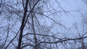 Snowfall in the city on a cloudy winter day, snowbound branches of trees. It is snowing, snowbound dark tree trunks against the gray cloudy sky on a winter day stock video