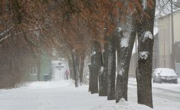 Snowfall in city, some cars on the street and far away one pedestrian. Snowfall in city, some cars on the street, trees and far away one pedestrian. Viljandi Royalty Free Stock Image