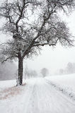 Snowfall on the country road Stock Image