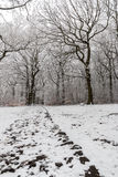 Snowfall at countryside Royalty Free Stock Image
