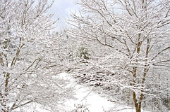 Snowfall covers a forest in the Smokies. Royalty Free Stock Photo