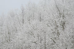 Snowfall covers a forest in the Smokies. Stock Photography