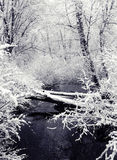 Snowfall and Creek (view 1). A toned image of a creek, set in a winter's snowfall stock images