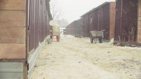 Snowfall in a dog shelter. Dogs in aviaries stock footage