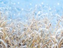 snowfall för första intryck royaltyfri foto
