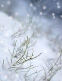 snowfall för första intryck royaltyfri bild