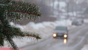 Snowfall. Fir branches covered with snow and drops. The car goes on the road.  stock video footage