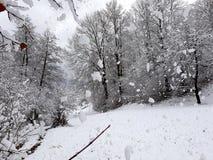 snowfall Flocos de neve Fotografia de Stock