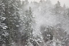Snowfall in the Forest Royalty Free Stock Photography