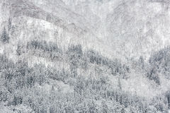 Snowfall with forest Stock Photo