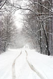 Snowfall on the forest country road Stock Photo