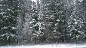 Snowfall in the forest Stock Photos