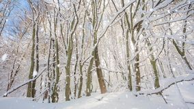 Snowfall in forest stock footage