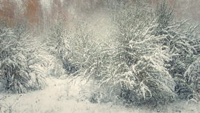 Snowfall in the forest stock footage