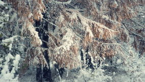 Snowfall in the forest 2 stock footage