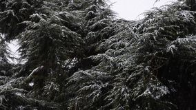 Snowfall in the forest park. Winter landscape in snow-covered park. stock video footage