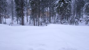 Snowfall in the forest park. Winter landscape in snow-covered park. Heavy beautiful snowfall on pines. slow motion stock video footage