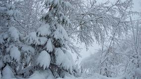 Snowfall in the forest park. Winter landscape in snow covered park. View of snow covered trees in nature stock footage