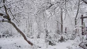 Snowfall in the forest park. Winter landscape in snow covered park. View of snow covered trees in nature stock video footage