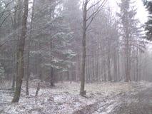 Snowfall Royalty Free Stock Photo