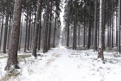 Snowfall in forest. Winter landscape..South Bohemian region.  stock photos