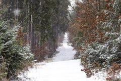Snowfall in forest. Winter landscape..South Bohemian region.  stock photo