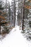 Snowfall in forest. Winter landscape..South Bohemian region.  royalty free stock photography