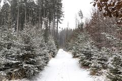 Snowfall in forest. Winter landscape..South Bohemian region.  stock images