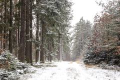 Snowfall in forest. Winter landscape..South Bohemian region.  royalty free stock images