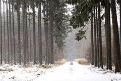 Snowfall in forest. Winter landscape..South Bohemian region.  stock image