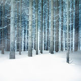 Snowfall forest Royalty Free Stock Photo