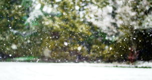 Snowfall in green forest stock video