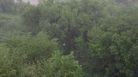 Snowfall and heavy rain in summer. In background are green trees, grass, path.