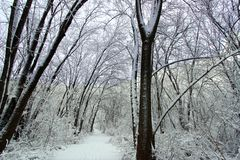 Snowfall Hiking Trail Illinois Stock Photos
