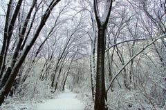 Snowfall Hiking Trail Illinois. Fresh snowfall along a hiking trail in northern Illinois Stock Photos